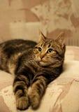 Ritratto di giovane gatto immagine stock libera da diritti