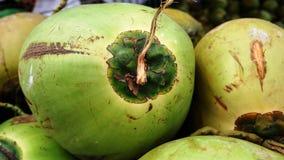 Ritratto di giovane noce di cocco verde Fotografie Stock Libere da Diritti