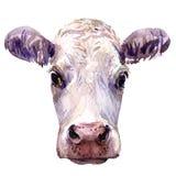 Ritratto di giovane testa isolata, illustrazione della mucca dell'acquerello su bianco Immagine Stock Libera da Diritti