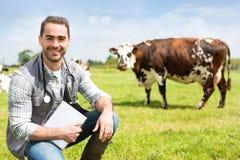 Ritratto di giovane veterinario attraente in un pascolo con le mucche Immagine Stock