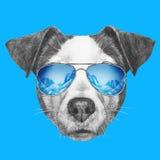 Ritratto di Jack Russell Dog con gli occhiali da sole dello specchio Fotografie Stock
