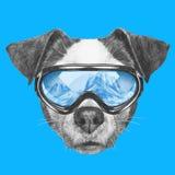 Ritratto di Jack Russell Dog con gli occhiali di protezione dello sci Fotografia Stock Libera da Diritti