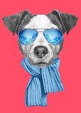 Ritratto di Jack Russell Dog con la sciarpa e gli occhiali da sole Fotografia Stock