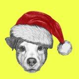 Ritratto di Jack Russell Dog con Santa Hat Fotografia Stock