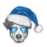 Ritratto di Jack Russell Dog con Santa Hat e gli occhiali da sole Immagine Stock Libera da Diritti