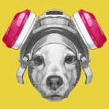 Ritratto di Jack Russell Terrier Dog con la maschera antigas Fotografie Stock