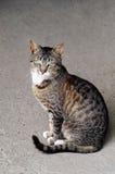 Ritratto di Kitty Immagini Stock