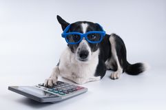 Ritratto di menzogne del cane con il calcolatore fotografia stock libera da diritti
