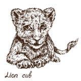 Ritratto di menzogne del cucciolo di leone, scarabocchio disegnato a mano, schizzo illustrazione vettoriale
