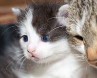Ritratto di piccolo gattino Immagini Stock