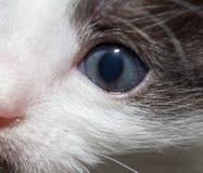 Ritratto di piccolo gattino Fotografia Stock