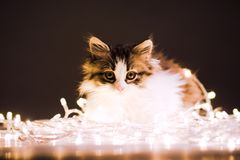 Ritratto di piccolo gattino alle luci di una ghirlanda Fotografie Stock Libere da Diritti