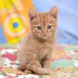 Ritratto di piccolo gattino sveglio fotografia stock libera da diritti