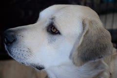Ritratto di profilo del cane Fotografia Stock
