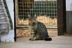 Ritratto di seduta del gatto immagini stock libere da diritti