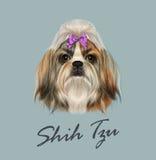 Ritratto di Shih Tzu Dog Illustrazione di vettore Fotografia Stock Libera da Diritti