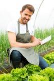 Ritratto di un agricoltore attraente in una serra facendo uso della compressa Immagine Stock