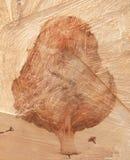 Ritratto di un albero in un ceppo immagini stock