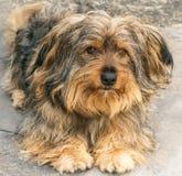 Ritratto di un cane Immagini Stock