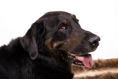 Ritratto di un cane Immagine Stock