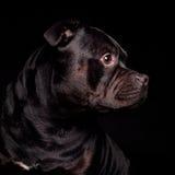 Ritratto di un cane Immagine Stock Libera da Diritti