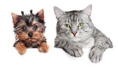 Ritratto di un cane e di un gatto Fotografia Stock