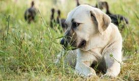 Ritratto di un cane nell'erba all'aperto Immagine Stock