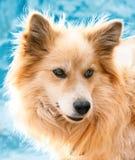 Ritratto di un cane nell'inverno Fotografia Stock Libera da Diritti