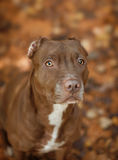 Ritratto di un cane su un fondo delle foglie immagine stock libera da diritti