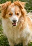 Ritratto di un cane sveglio Fotografia Stock Libera da Diritti