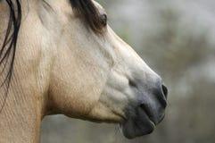 Ritratto di un cavallo Fotografia Stock