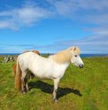 Ritratto di un cavallo bianco Immagini Stock Libere da Diritti