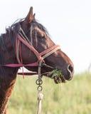 Ritratto di un cavallo sulla natura Immagini Stock