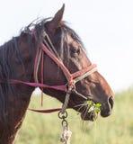 Ritratto di un cavallo sulla natura Fotografia Stock Libera da Diritti