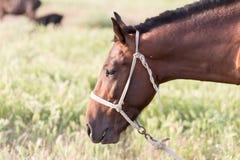 Ritratto di un cavallo sulla natura Fotografie Stock