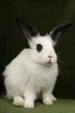 Ritratto di un coniglio fotografia stock