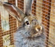 Ritratto di un coniglio di coniglietto grigio adorabile sveglio che sta su in una gabbia immagini stock