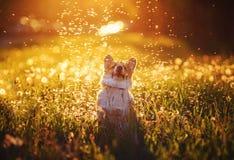 Ritratto di un Corgi rosso del cane del piccolo cucciolo sveglio che si siede su un prato caldo di estate con i fiori su un fondo immagini stock