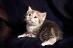 Ritratto di un gattino Fotografia Stock Libera da Diritti