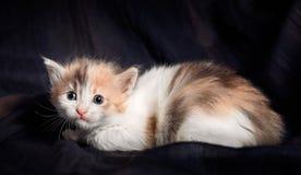 Ritratto di un gattino Immagini Stock