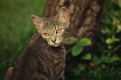 Ritratto di un gattino grigio immagine stock libera da diritti