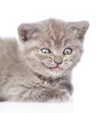 Ritratto di un gattino sorridente Isolato su priorità bassa bianca fotografie stock