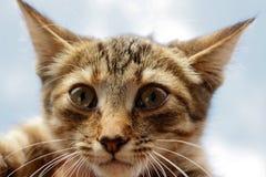 Ritratto di un gattino a strisce contro un cielo blu Immagine Stock