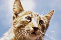 Ritratto di un gattino a strisce contro un cielo blu Fotografie Stock