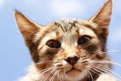 Ritratto di un gattino a strisce contro un cielo blu Immagini Stock