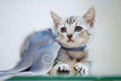 Ritratto di un gattino a strisce grigio con un arco immagine stock