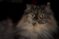 Ritratto di un gatto Immagini Stock Libere da Diritti