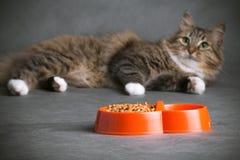 Ritratto di un gatto domestico lanuginoso che esamina con interesse la ciotola in pieno di alimento asciutto Fotografia Stock Libera da Diritti