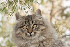 Ritratto di un gatto lanuginoso fotografie stock