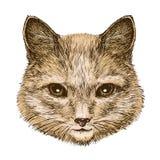 Ritratto di un gatto lanuginoso Illustrazione d'annata di vettore di schizzo illustrazione di stock